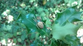 La vie d'araignée photos libres de droits