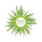 La vie d'Eco des textes d'herbe verte Photos stock