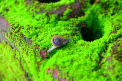 La vie d'escargot Images libres de droits