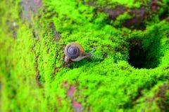 La vie d'escargot Images stock