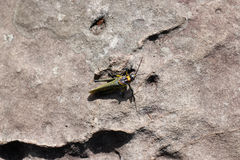 La vie d'insecte sur la roche Photo stock