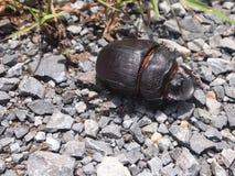 La vie d'un insecte Photos stock