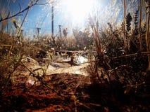 La vie dans la broussaille Photographie stock