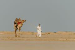 La vie dans le désert Images libres de droits