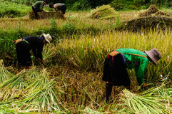 La vie dans Sapa-Viet Nam Image libre de droits