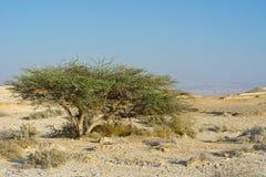 La vie dans un désert sans vie Photo stock