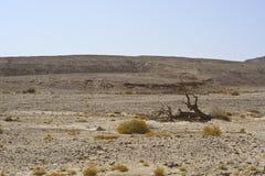 La vie dans un désert sans vie Photos stock