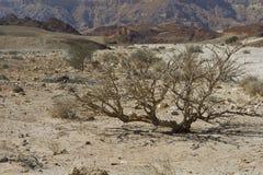 La vie dans un désert sans vie Image stock