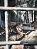 La vie dans une cage photo libre de droits