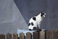 La vie de chat Image libre de droits