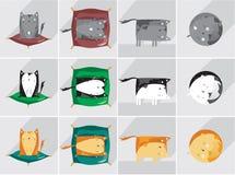 La vie de chats Image stock