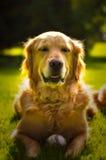 La vie de chien Photo libre de droits