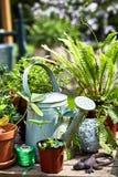 La vie de distillateur de jardin de ressort avec la boîte d'arrosage photos stock