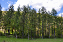 La vie de forêt Images stock