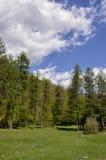 La vie de forêt Images libres de droits