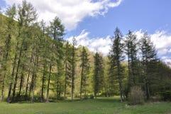 La vie de forêt Photo libre de droits