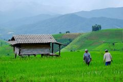 LA VIE DE L'AGRICULTEUR Photo libre de droits