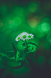 La vie de la fleur Images libres de droits
