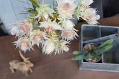 La vie de la jeune mariée de rougissement proten toujours des fleurs avec la décoration photographie stock libre de droits