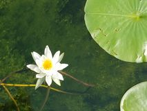 La vie de lac Suz Image stock