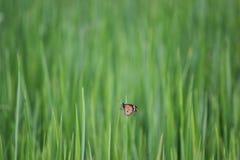La vie 1 de papillon Photo libre de droits