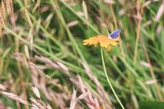 La vie de papillon images libres de droits