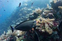 La vie de récif Images stock