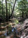 La vie de rivière Images stock