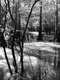 La vie de rivière noire et blanche Photos libres de droits