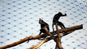 La vie de zoo Photo libre de droits