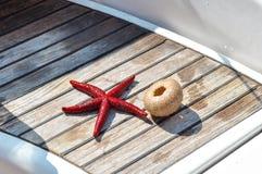 La vie des poissons d'étoile et le squelette toujours d'oursin woden dessus le backgrou Photos stock