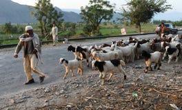 La vie en vallée de coup, Pakistan Photo libre de droits