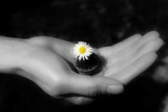 La vie est dans des vos mains Photo libre de droits