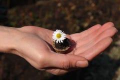 La vie est dans des vos mains Image stock