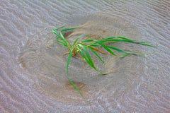 La vie humaine est comme l'herbe en vent conception image stock