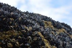 La vie les Cornouailles newquay de plage Images stock