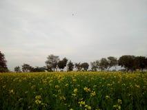 La vie naturaliste de village de tir d'écran de paysage photo stock