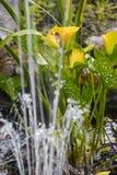 La vie paisible d'étang Photos libres de droits