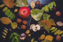 La vie pluvieuse d'automne toujours Images stock