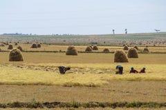 La vie rurale africaine et terres cultivables photographie stock