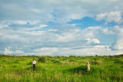La vie rurale saine La femme et l'homme dans le domaine vert Photographie stock