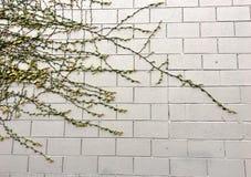 La vie s'élevant sur un mur de briques Photographie stock libre de droits