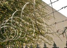 La vie s'élevant sur une protection de fil de mur de briques et de rasoir Photo libre de droits