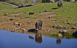 La vie sauvage dans le zoo image libre de droits