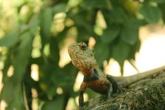 La vie sauvage sri-lankaise images stock