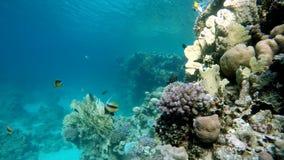 La vie submersible Beau récif coralien banque de vidéos