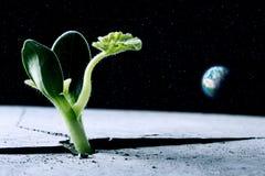 La vie sur d'autres planètes Photos libres de droits