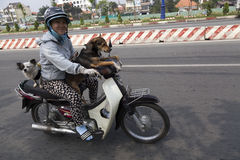 La vie sur des motocyclettes Photographie stock libre de droits