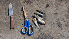 La vie toujours avec des poissons sur le bord de mer Photo libre de droits