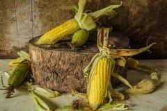 La vie toujours avec du maïs Image stock